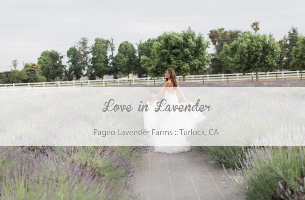 Creative-Flow-Co. :: San-Francisco-Wedding-Planner ::  Love-in-Lavender